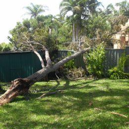 brokentree
