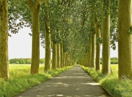 French trees on way to a castle