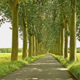 Frenchtreesonwaytoacastle