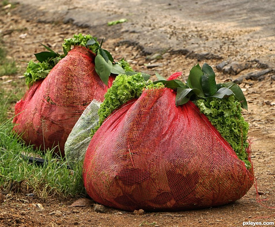 Two Triangular Lettuce Carriers - really
