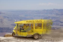Mules_On_Wheels