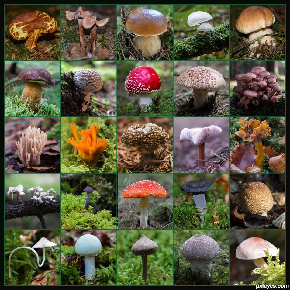 So many mushrooms