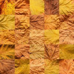 Autumn25