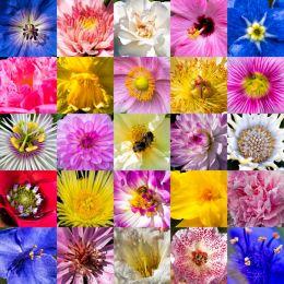 flower centres