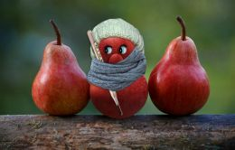 apple fever