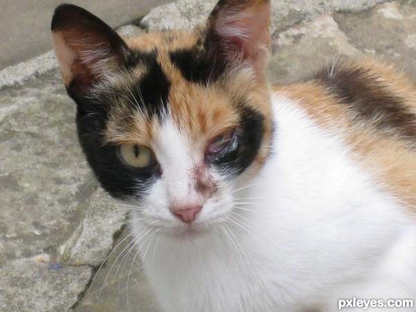 Poor cat