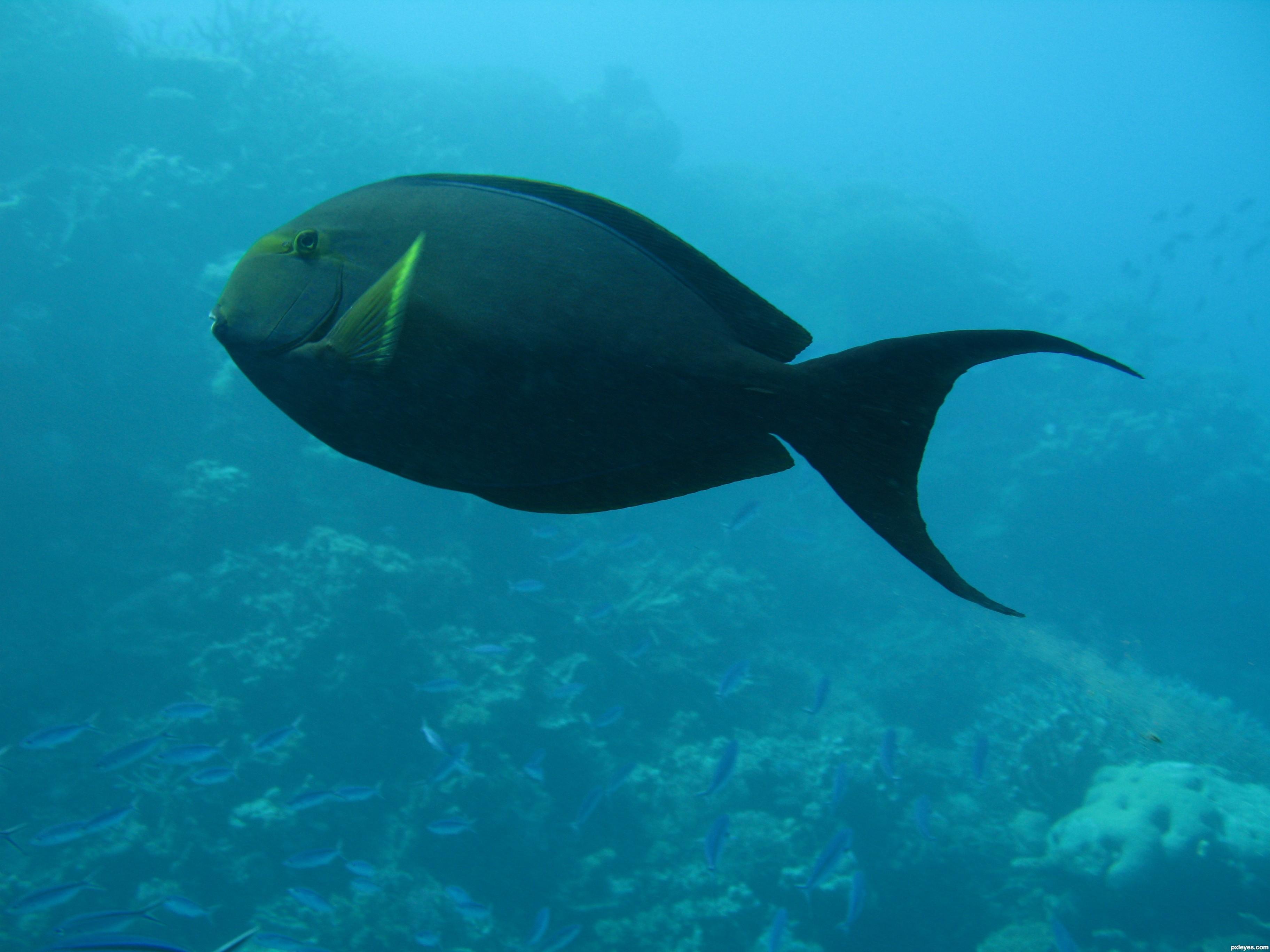 Underwater photography fish
