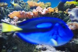 blur blue fish