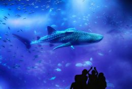 At the Aquarium Picture