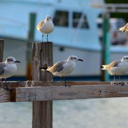 5seagulls