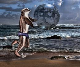 DolphinBall