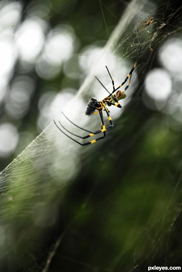 Motherhood of a Spider.