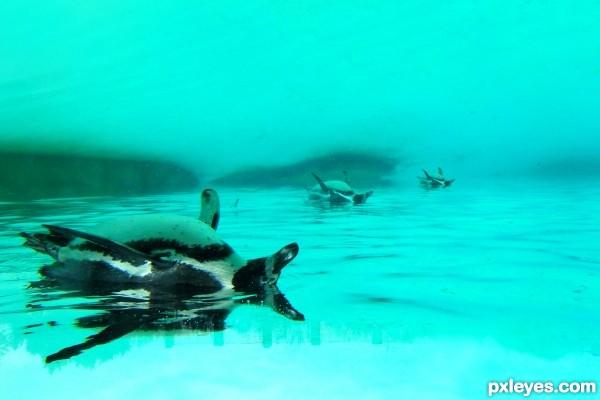 Surreal Penguins
