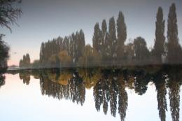 treesreflection
