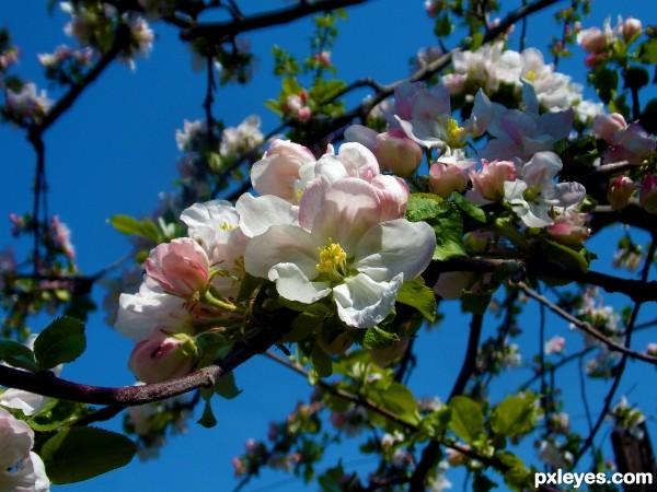 1497-spring trees