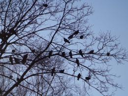 Pigeons on branches of a tree