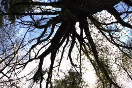 TreeUp