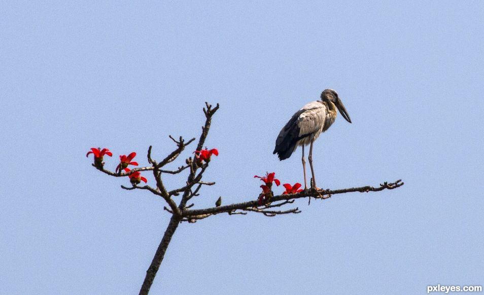 Haiku - Bird, Branch, Bloom