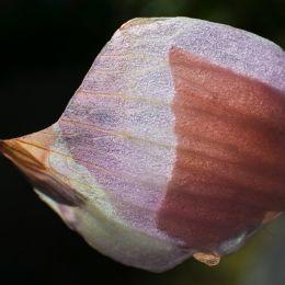 Onionpeelbeauty