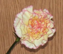 FlowerofLove