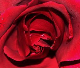 Rosesare