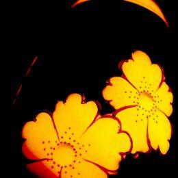 Porcelainflowers
