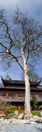 TreeinChina