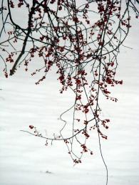 WinterBeauty
