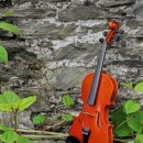 violin source image
