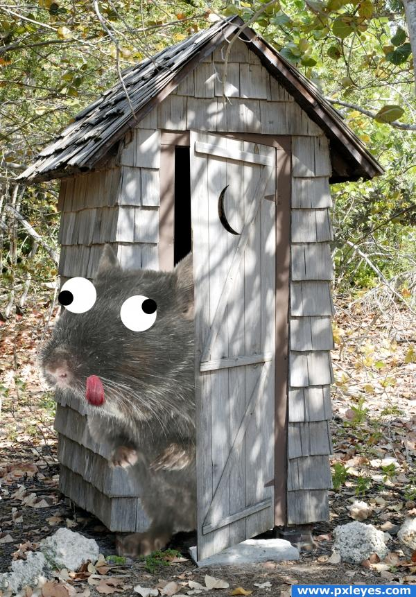 Crazier than Outhouse Rat!