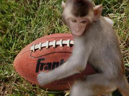 MonkeyPlayingFootball