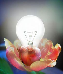 Flowerbulb