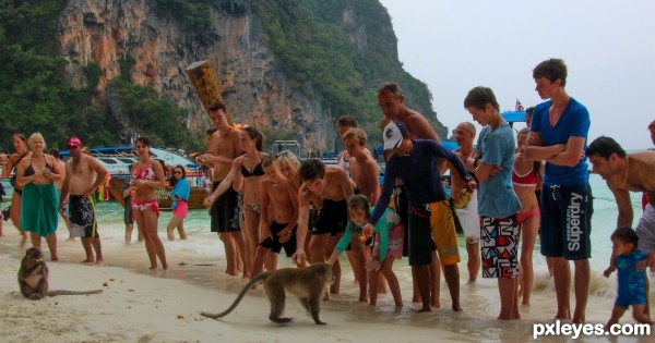 Line up and feed the Monkeys