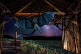 Bat Cat gets out of the barn