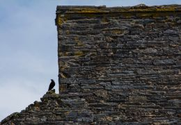 Chimney wall and the crow