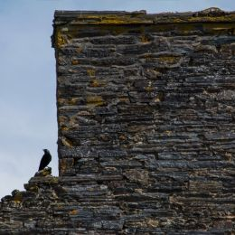 Chimneywallandthecrow