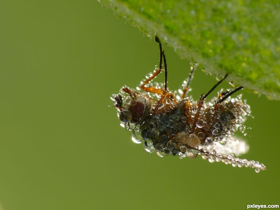 A very wet fly