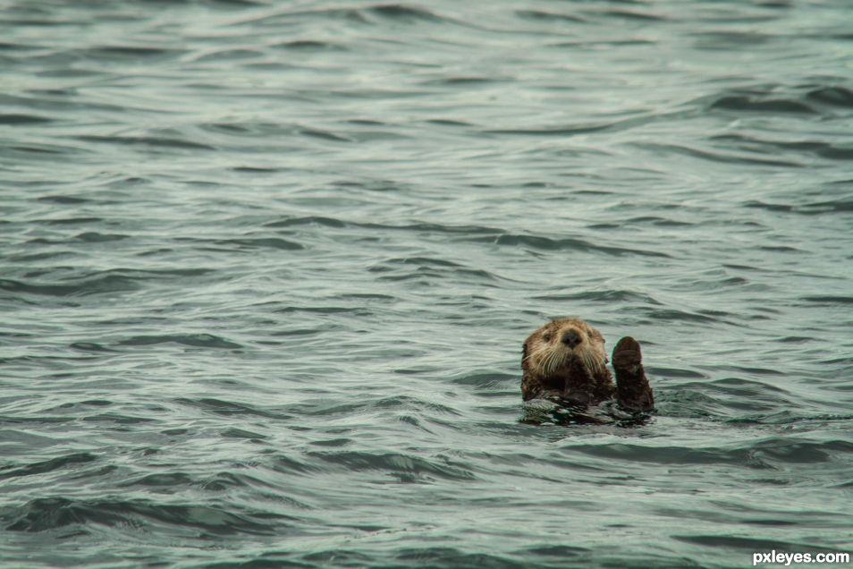 High Five Mr Otter