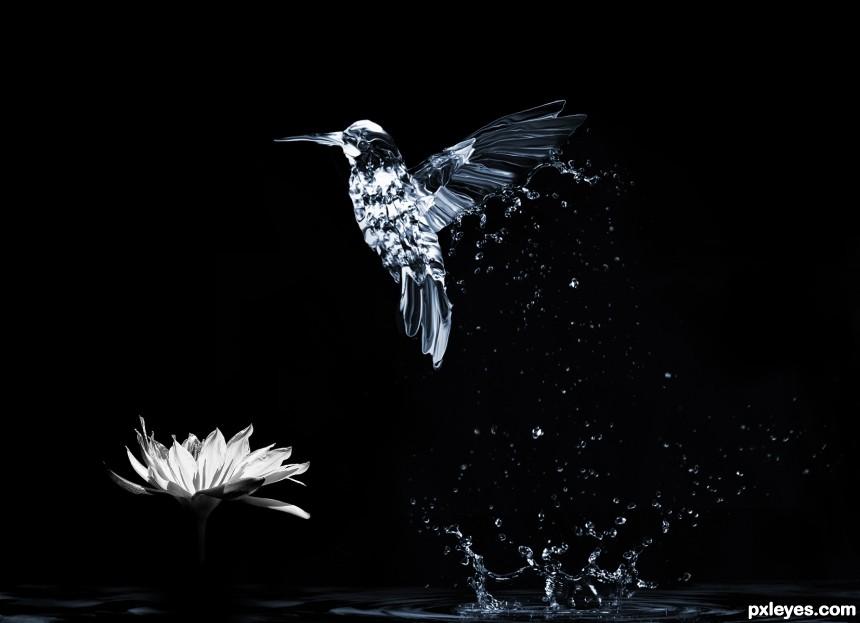Hummingbird photoshop picture)