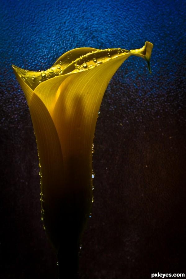 Droplet on Flower