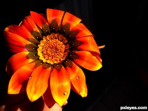 Uma flor com gotinhas.