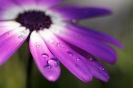 FlowersInTheRain