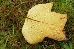 autumndrops