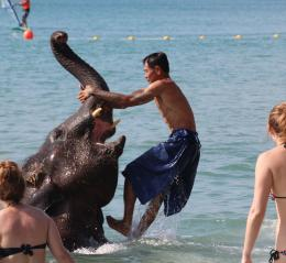ElephantFun