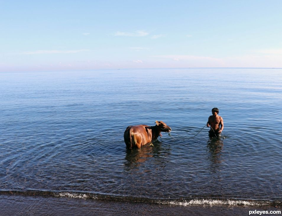 Entry number 108754 Man bathing his cow in sea waters, Bali