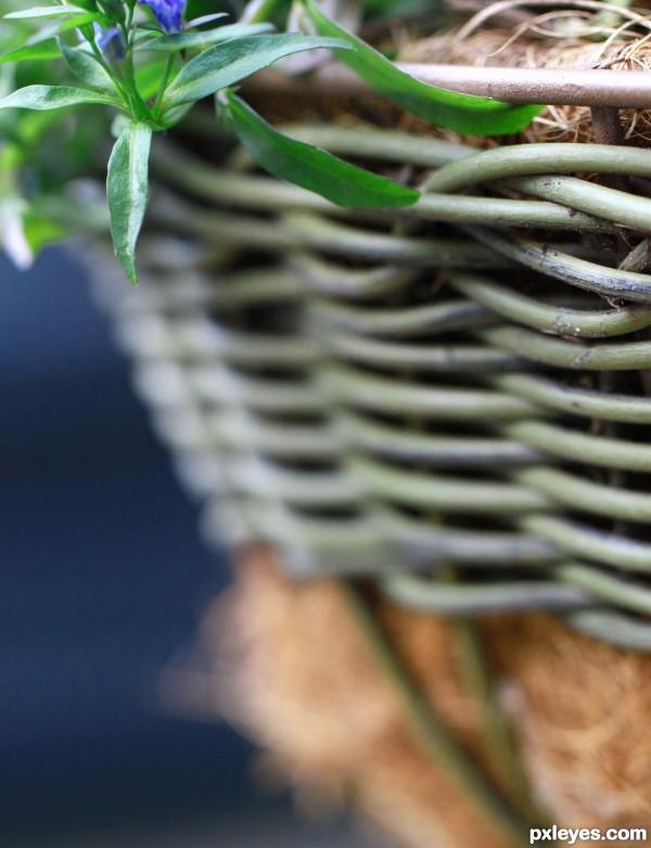 pot weave