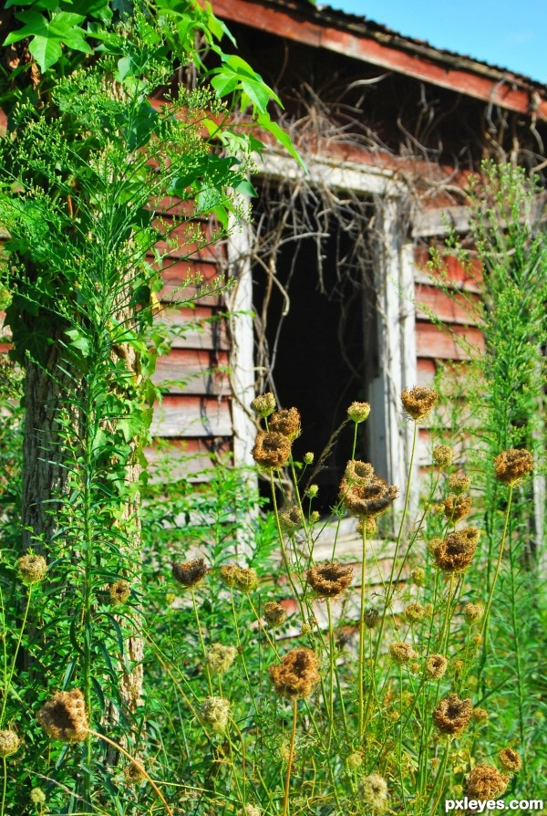 Summer's Last Hurrah of Weeds - created by photogirl723