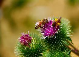 Purpleweeds