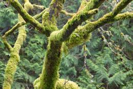 TreeMoss