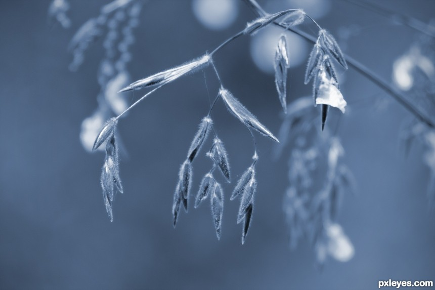 Speargrass Blues photoshop picture)